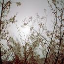 """Fullmoon@Sakura Hanami"", 2008, 186 x 186 x 5 cm (frame size) / 180 x 180 cm (image size) , C-print faced mounted onto acrylic, Edition of 3"