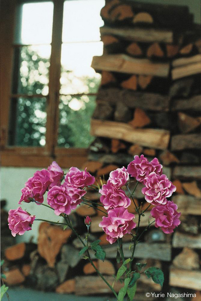 """Roses and firewoods"", 2007, C-print, Edition of 8+2AP"